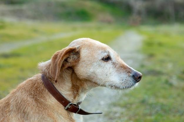 Kleine hond met kraag