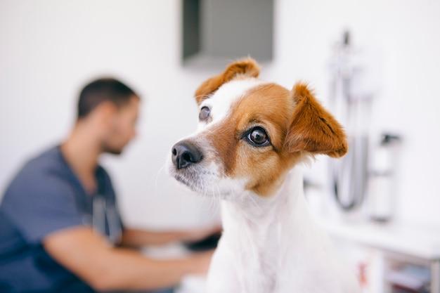 Kleine hond op een veterinaire afspraak