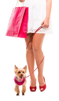 Kleine hond yorkshire terriër en boodschappentassen.