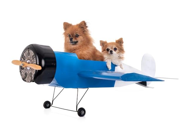 Kleine honden op een miniatuurvliegtuig