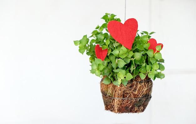 Kleine huisplant met rode hartvorm. geïsoleerde achtergrond