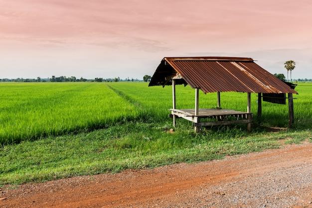 Kleine hut in het rijstveld