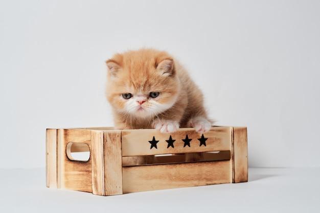 Kleine jonge oranje exotische kat in een doos
