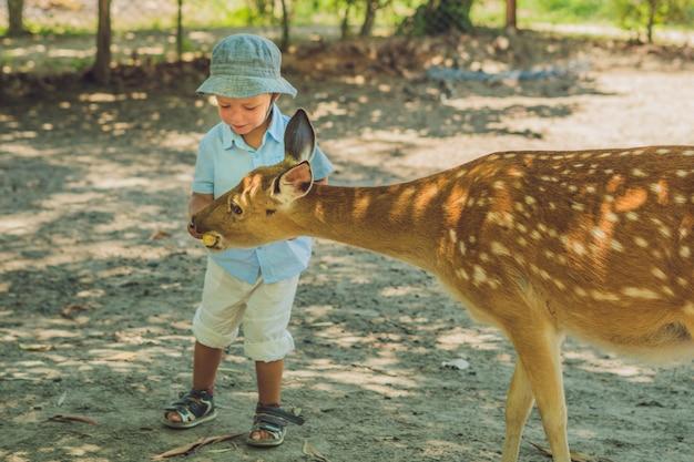 Kleine jongen die een hert voedt in de dierentuin