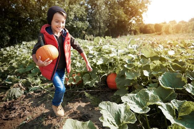 Kleine jongen die met een pompoen op het veld loopt