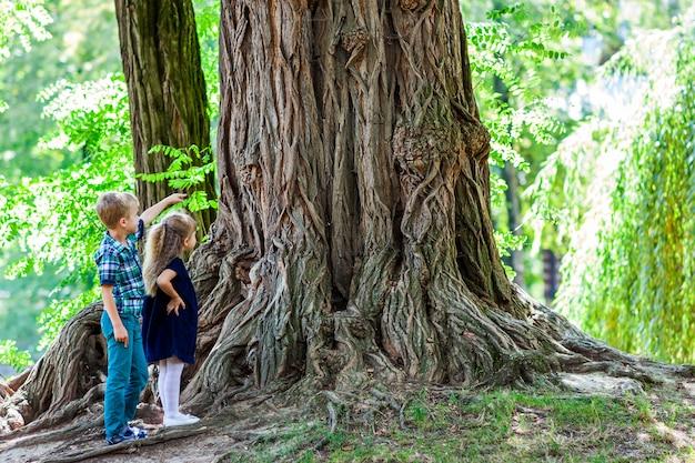 Kleine jongen en meisje broer en zus staan naast een grote stronk van een oude boom. gelukkige kinderen die in mooi de zomerpark op warme zonnige dag spelen.