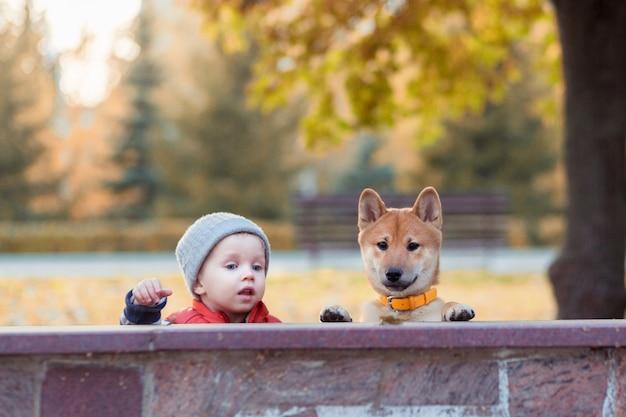 Kleine jongen en rode shiba inu puppy plezier buitenshuis in herfst park. hond vriend man concept