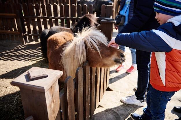 Kleine jongen streelt een ponyveulen in de dierentuin. liefde en dierenbeschermingsconcept