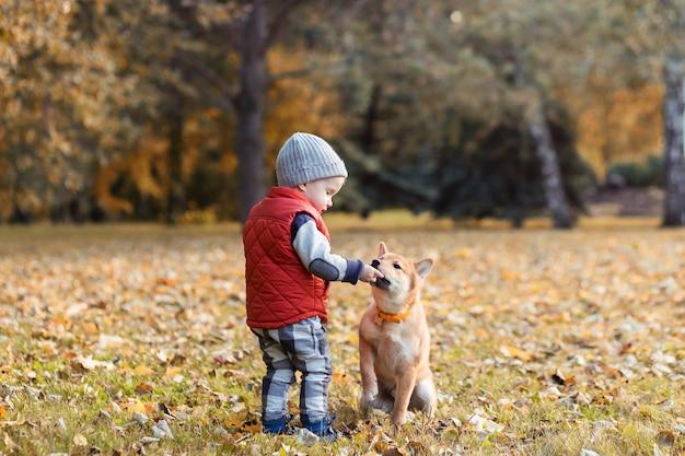 Kleine jongen voedt de shiba inu-puppy tijdens het wandelen in het herfstpark. shibainu-hond met baby die samen speelt, beste vriendenconcept