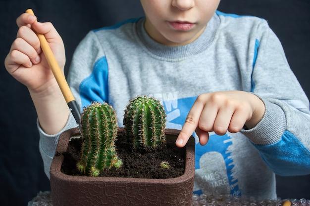 Kleine jongen zette zijn kamerplantcactus neer