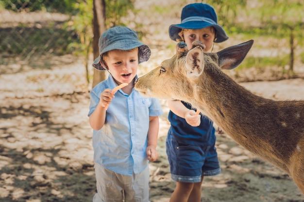 Kleine jongens die een hert voeden in de dierentuin