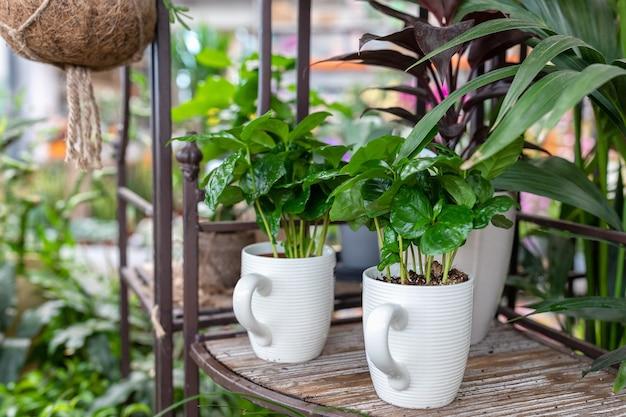 Kleine kamerplant in een creatieve theekoppot