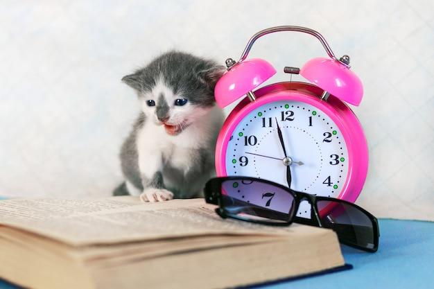 Kleine kat dichtbij open boek en klok. afstandsonderwijs tijdens quarantaine
