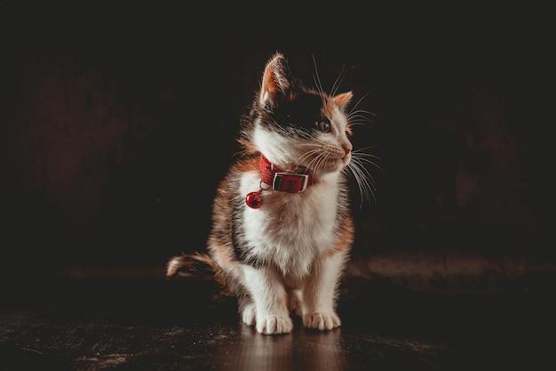 Kleine kat in fotostudio