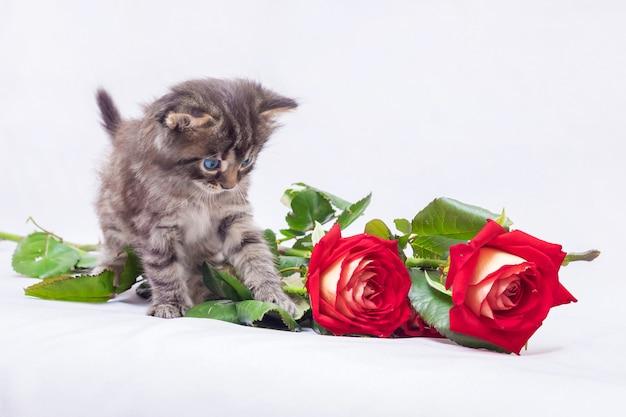 Kleine kat kijkt naar rode rozen.