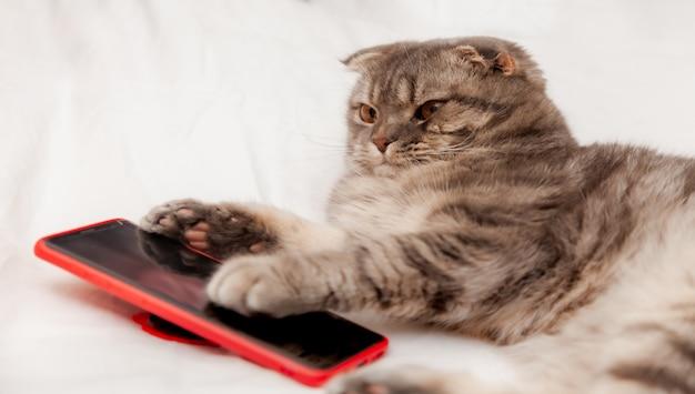 Kleine kat met smartphone in bed