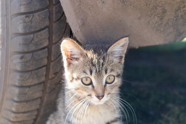 Kleine kat onder de wielen van de auto. veiligheid voor uw huisdier. gevaar voor het dier.