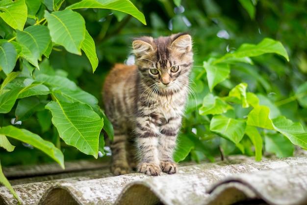 Kleine kat, zittend op het dak