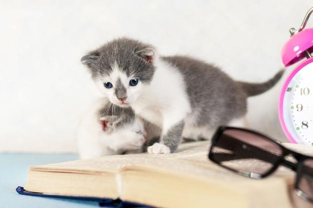 Kleine katjes bij een open boek, glazen en een klok