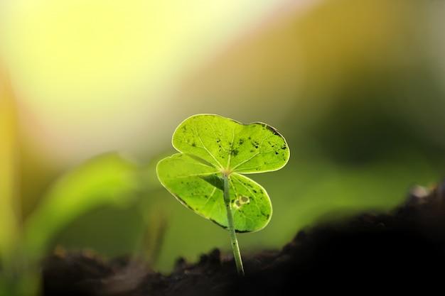 Kleine katoenplant, born concept
