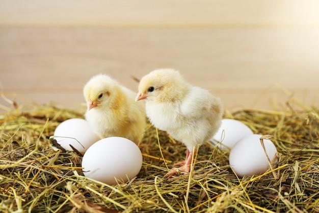 Kleine kippen en eieren zijn op het hooi
