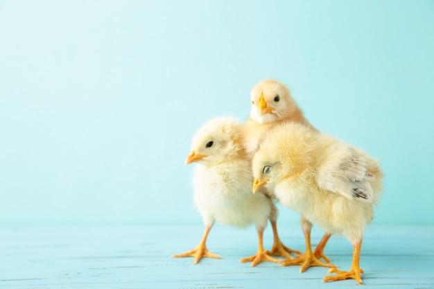 Kleine kippen op blauw