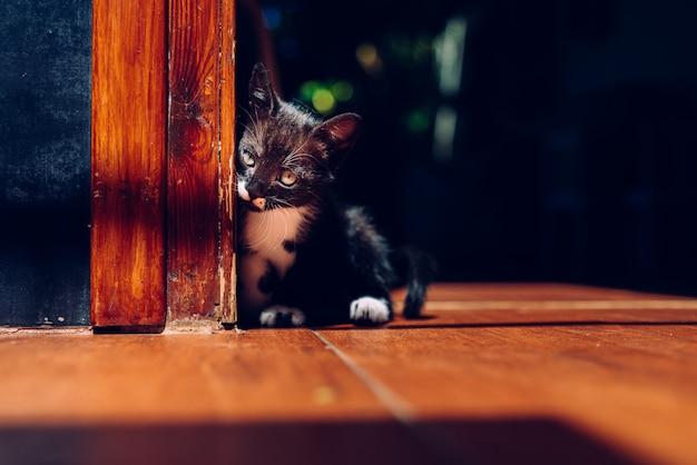 Kleine kitten, huisdier, gewoon zittend op de grond.