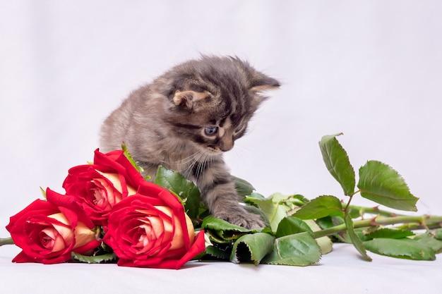 Kleine kitten in de buurt van een boeket van rode rozen geschonken voor verjaardag