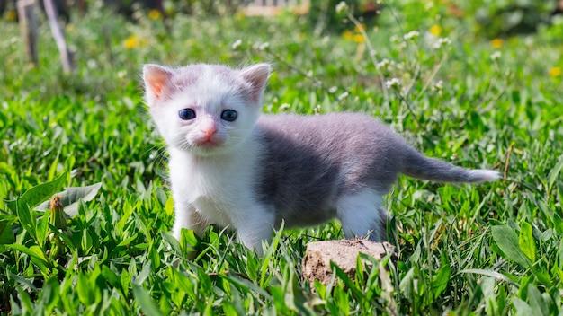 Kleine kitten in de tuin onder het groene gras
