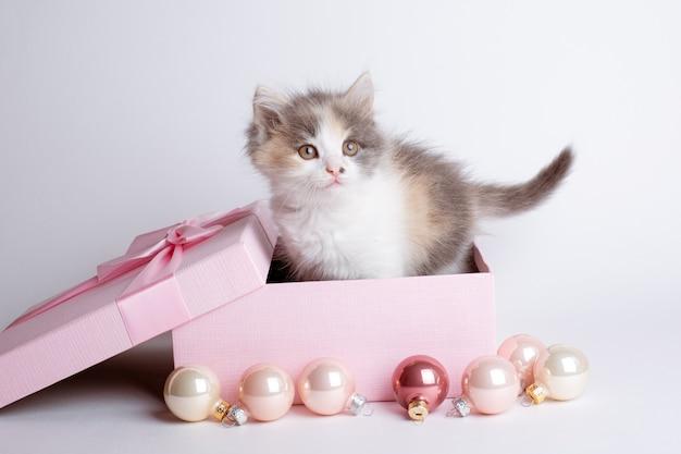 Kleine kitten in een doos op een witte achtergrond nieuwjaar