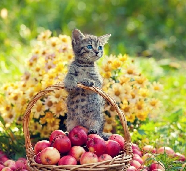 Kleine kitten in een mand met rode appels