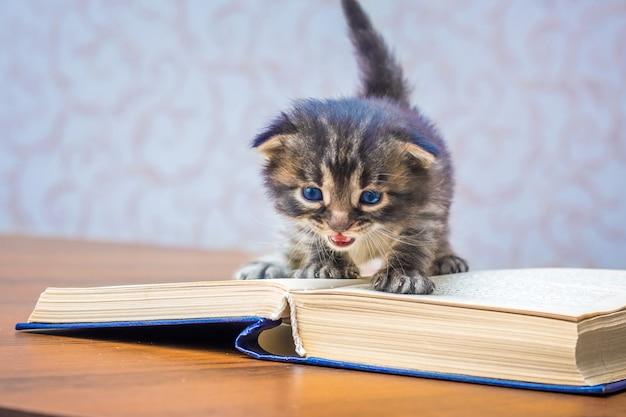 Kleine kitten met blauwe ogen in de buurt van een open boek. klassieke literatuur lezen