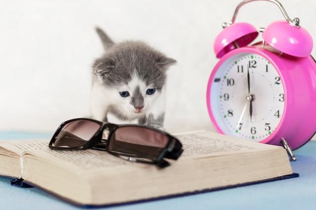 Kleine kitten op een open boek in de buurt van glazen en klok, een boek lezen