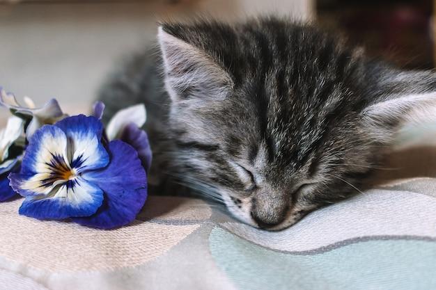 Kleine kitten slaapt in de buurt van blauwe bloemen.