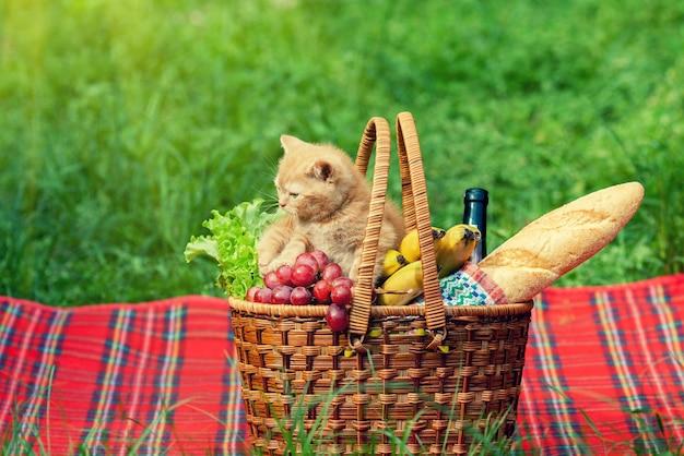 Kleine kitten snuffelt buiten aan de picknickmand