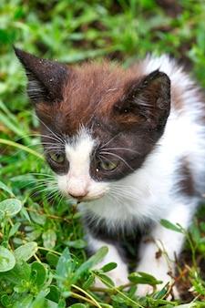 Kleine kitten zit en verstopt zich in het groene gras