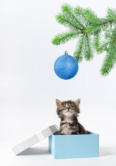 Kleine kitten zit in een geschenkdoos en kijkt omhoog naar een tak van sparren met een blauwe bal
