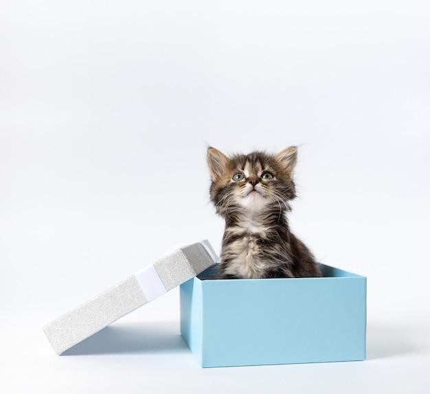 Kleine kitten zit in een geschenkdoos en kijkt op. kopieer ruimte