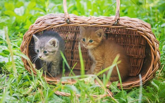 Kleine kittens zijn grijs en rood