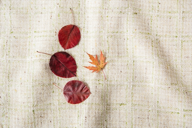 Kleine kleurrijke herfstbladeren. plat leggen. tafelkleed achtergrond. minimalistische stijl.