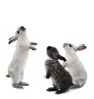 Kleine konijnen op wit