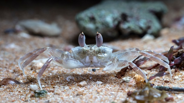 Kleine krab op het strand