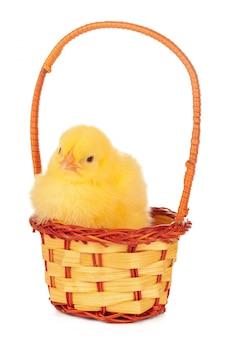 Kleine kuiken en eieren in nest, geïsoleerd op de witte
