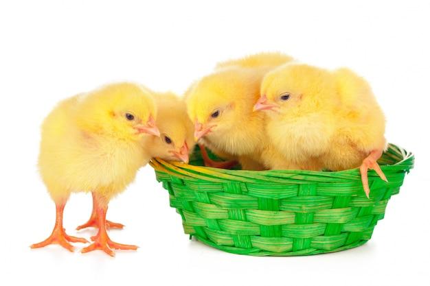 Kleine kuiken en eieren in nest, geïsoleerd op het wit