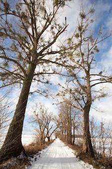Kleine landweg bedekt met sneeuw weg waarlangs hoge bomen groeien.