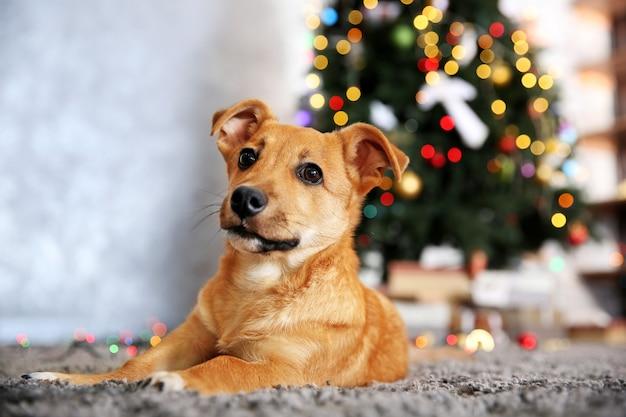 Kleine leuke grappige hond tot op tapijt over kerstboom