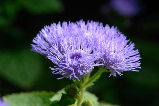 Kleine lila bloemen in een tuin