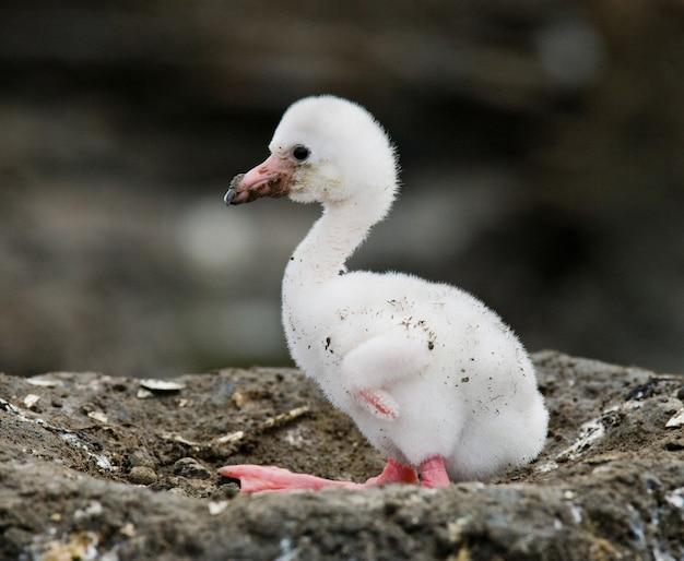 Kleine meid caribische flamingo