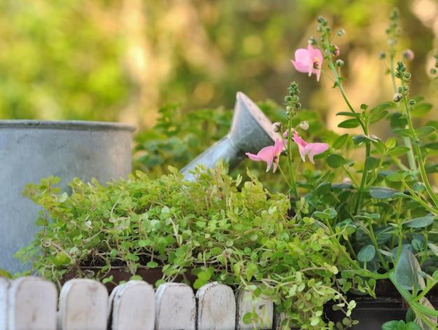 Kleine metalen gieter in groene planten