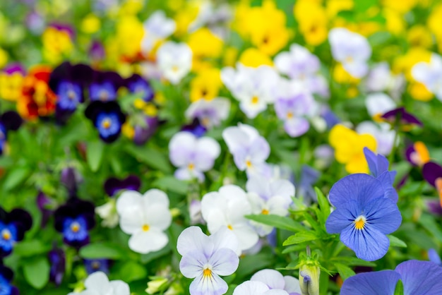 Kleine mooie bloemen in de zomer in het veld